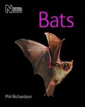 Phil Richardson Bats