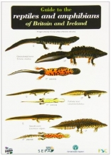 Peter Roberts,   Denys Ovenden Guide to the Reptiles and Amphibians of Britain and Ireland