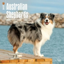 Browntrout Publishers, Inc Australian Shepherds 2017 Square