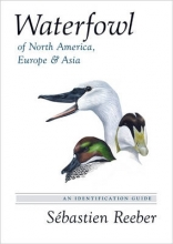 Reeber, Sébastien Waterfowl of North America, Europe, and Asia