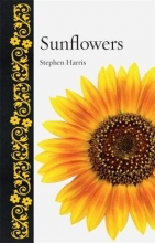 Stephen A. Harris Sunflowers