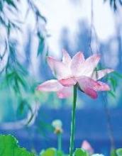 Lotus III Blankbook