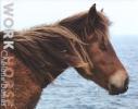 Dumas,Charlotte Dumas, Work Horse