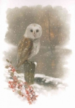 Winter Owl Small Boxed Holiday Cards