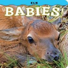 Lehmann, Steph Elk Babies!