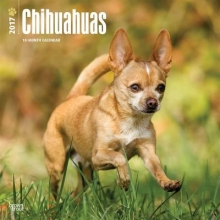 Browntrout Publishers, Inc Chihuahuas 2017 Square