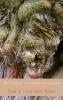 Abe J. van der  Veen,De wijsheid van bomen en kruiden