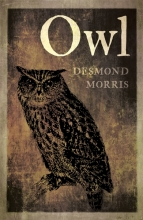 Desmond Morris Owl