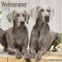Avonside Publishing Ltd. Weimaraner Calendar 2018