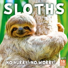 Sloths 2017 Calendar