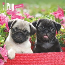 Browntrout Publishers, Inc Pug Puppies 2017 Square