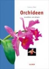 Bert, Isabelle Orchideen