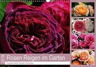 Cross, Martina Rosen Reigen im Garten (Wandkalender 2019 DIN A3 quer)