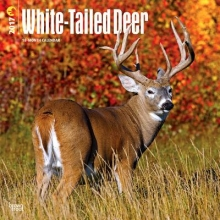 Browntrout Publishers, Inc White-Tailed Deer 2017 Square