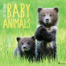 Baby Animals 2017 Calendar