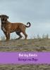 Soraya  Van Duijn ,Bad dog Dakota
