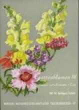Klein, Ludwig Gartenblumen Sommerflor 1