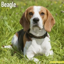 Avonside Publishing Ltd. Beagle Calendar 2017