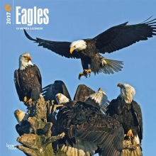 Browntrout Publishers, Inc Eagles 2017 Square