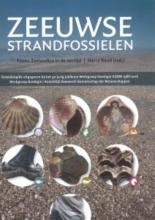 , Zeeuwse strandfossielen