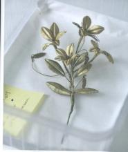 Lieve Watteeuw ea Berlinde De Bruyckere, It almost seemed a lily
