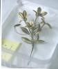 Lieve  Watteeuw ea Berlinde  De Bruyckere,It almost seemed a lily