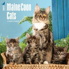 Maine Coon Cats 2017 Calendar