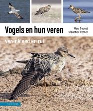 Sébastien Reeber Marc Duquet, Vogels en hun veren