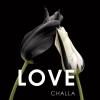 B-J  Challa,Love Tulips in love