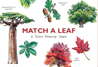 Match a Leaf A Tree Memory Game:A Tree Memory Game
