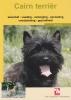 <b>Cairn terrier</b>,
