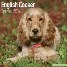Avonside Publishing Ltd. English Cocker Spaniel Calendar 2016