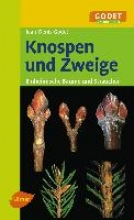 Godet, Jean-Denis Knospen und Zweige