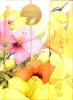 , Notitieboek a6 marjolein bastin kolibri en bloemen