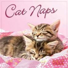 Cat Naps 2017 Calendar