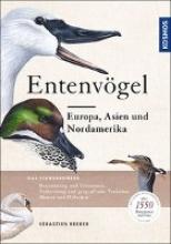 Reeber, Sébastien Entenvögel