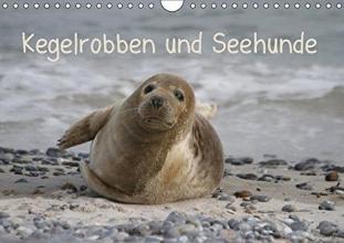 Kegelrobben und Seehunde (Wandkalender 2017 DIN A4 quer)