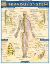 Perez, Vincent Nervous System Laminate Reference Chart