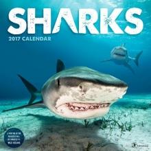 Sharks 2017 Calendar