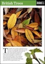 Instant Guides British Trees