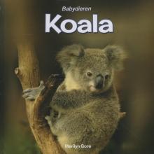 Michael  Gore Koala