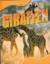 Sally  Morgan Giraffen