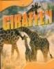 Paul Morgan,Giraffen dierenleven