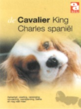 , Cavalier King Charles Spaniel