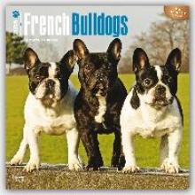 French Bulldogs 2016 Calendar