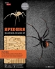 Tepper Brown Ruth,Spiders - Incredibuilds