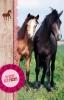 ,SET Paarden Uitnodiging Kl. Pk 692 6x3,95