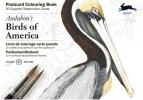 Pepin van Roojen ,Audubon`s Birds of America - Postcard Colouring Book
