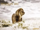 ,Wildlife 2017 Posterkalender