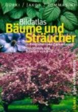 Bürki, Moritz Bildatlas Bäume und Sträucher in Ziergärten und Parkanlagen